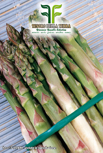 Asparagus Early d'argenteuil