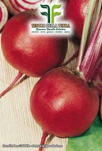 Table Beet of Chioggia