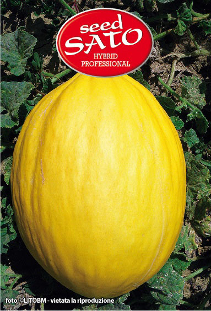 Yellow Melon F1 Elgon