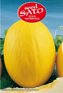 Yellow Melon Sirius